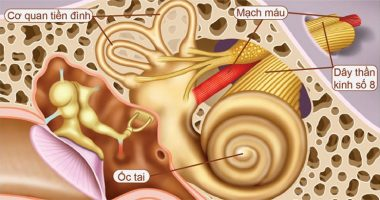 Rối loạn tiền đình là gì, cách phòng và điều trị rối loạn tiền đình hiệu quả?