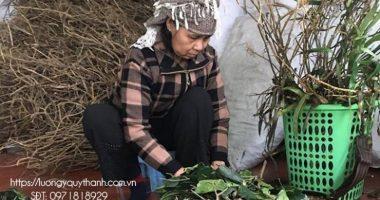 Lương y Nguyễn Quý Thanh