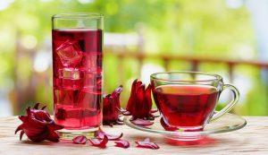 Bụp giấm / Atiso đỏ (hibiscus)