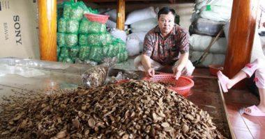 Thầy lang Lục Xuân Út và những bài thuốc đông y nổi tiếng!