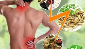 Thuốc đông y có tác dụng chữa thoát vị đĩa đệm